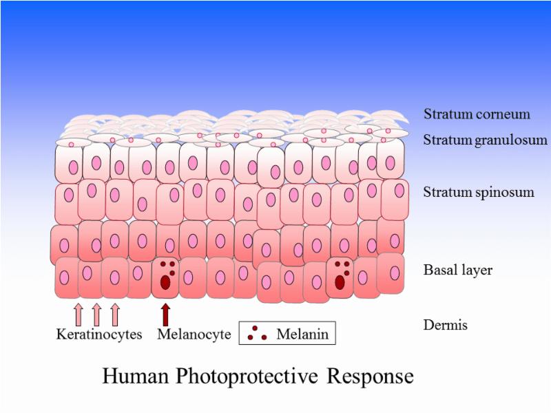 gorham skin cell pic