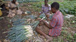 indiginous women making baskets